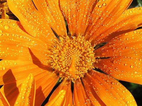 Closeup, Orange Flower, Yellow Flower, Flower, Orange