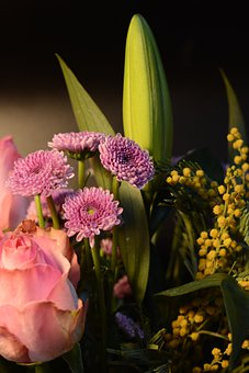 Flower, Chrysanthemum, Flowers, Pink