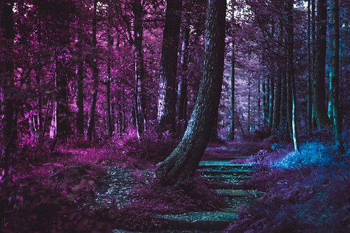 Forest, Violet, Nature, Spring, Purple