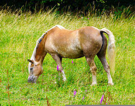 Horse, Meadow, Animal, Pasture, Coupling