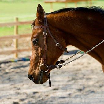 Horse, Animal, Horse Head, Brown, Animal Portrait