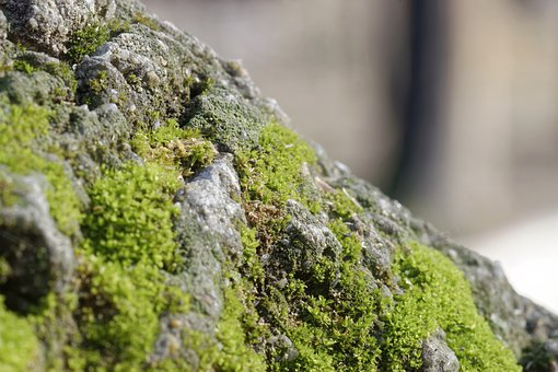 Moss, Green, Cliff, Stone, Nature, Almost