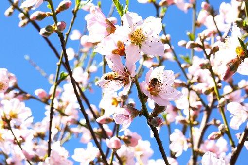 Flowers, Pink Flowers, Bees, Bee, Pink