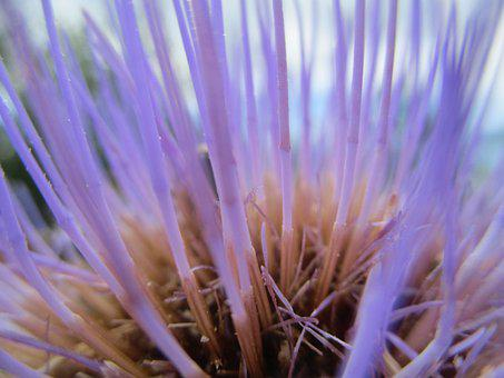 Flower, Detail, Nature, Spring, Garden