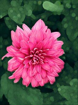 Flower, Magenta Flower, Maroon Flower