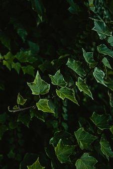 Plant, Green, Nature, Summer, Jungle