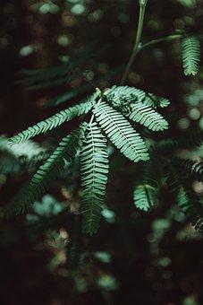 Plant, Green, Macro, Nature, Summer