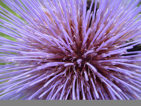 Flower, Violet, Nature, Plants, Garden