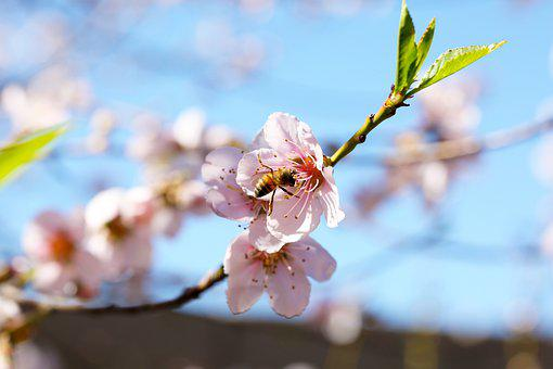 Bee, Bees, Pollinating, Nature