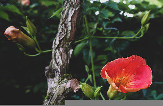 Flower, Flowers, Garden, Summer, Spring, Nature, Plants