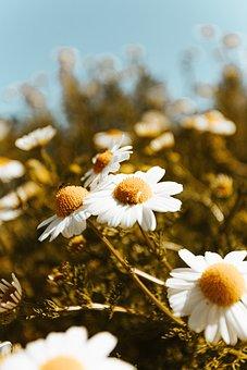 Flower, Petal, Colorfull, Summer, Floral