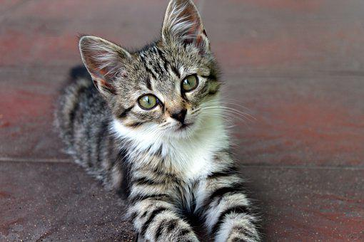 Cat, Kitten, Young, Animals, Fur, Nice, Appearance
