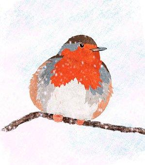 Robin, Bird, Nature, Animal, Songbird, Branch