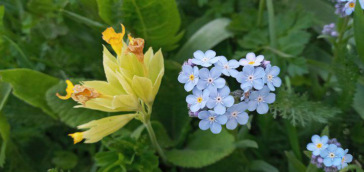 Flowers, Yellow Flower, Blue Flower, Blue, Yellow