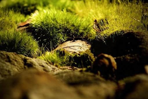 Close Up, Mossy, Moss, Dark, Nature