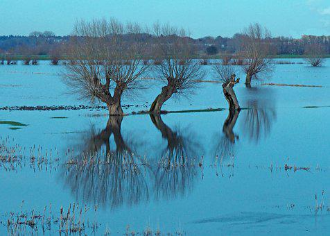 Polder, Netherlands, Rhine, Tree, River