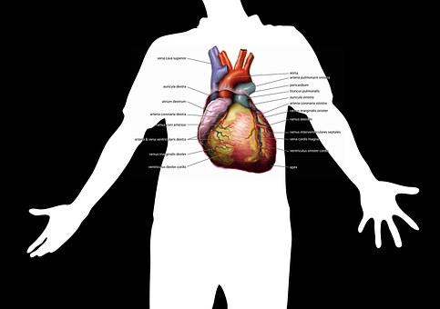 Health, Body, Silhouette, Investigation, Heartbeat