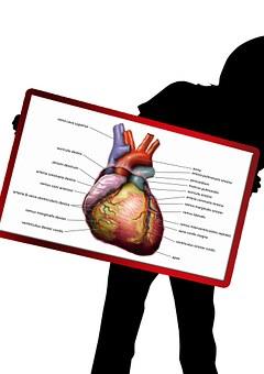 Health, Body, Silhouette, Investigation