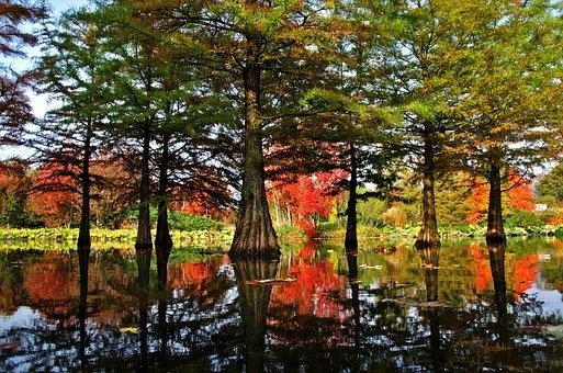 Nature, Water Reflection, Landscape