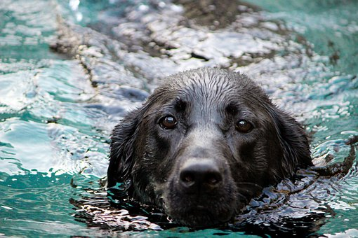 Dog, Water, Snout, Mammal, Black, Pet, Animal