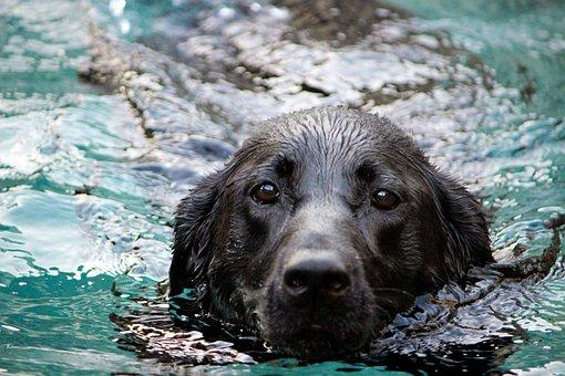 Dog, Water, Snout, Mammal, Black, Pet