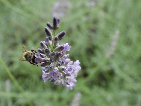 Bee, Flower Flowers, Insect, Garden