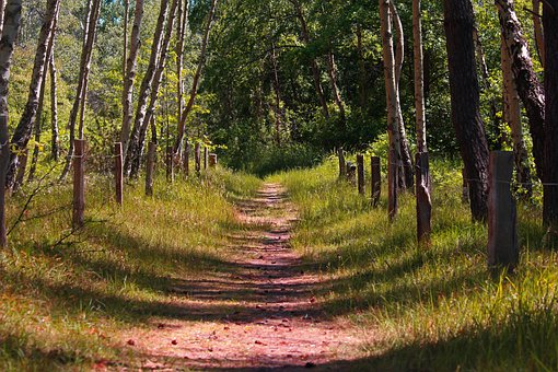 Forest Path, Trail, Birch Forest, Away, Forest, Nature