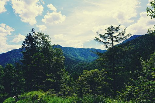 Forest, Hills, Mountains, Sky, Nature, Valley, View