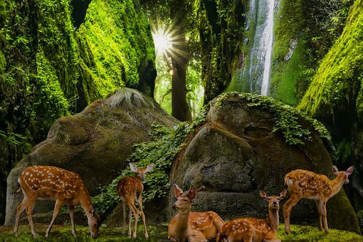 Nature, Landscape, Forest, Animals