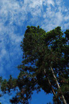 Forest, Nature, Sky, Cloud