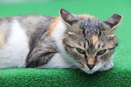 Cat, Street Cat, Pets, Gilnyangyi