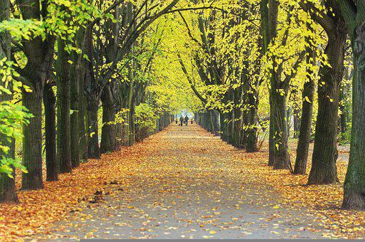 Walkway, Forest, Nature, Trees, Rows