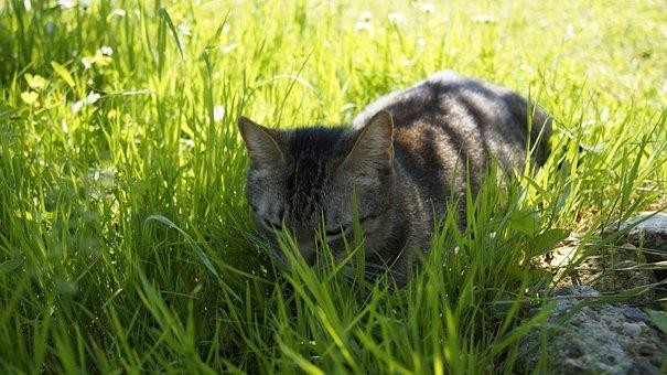 Cat, Grass, Feline, Nature, Animals
