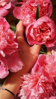 Flowers, Pink, Flora, Hand, Background, Bouquet, Color
