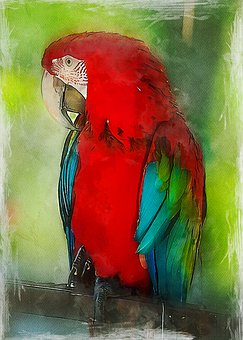 Parrot, Macaw, Colorful, Exotic, Bird, Animal, Nature
