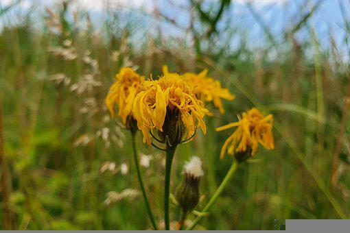 Flower, Nature, Blossom, Bloom, Plant