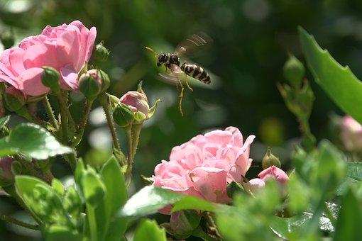 Wasp, Hornet, Blossom, Bloom, Flower