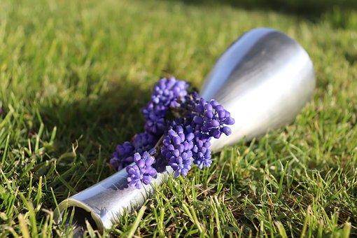 Muscari, Hyacinth, Blue, Flower, Blossom, Spring