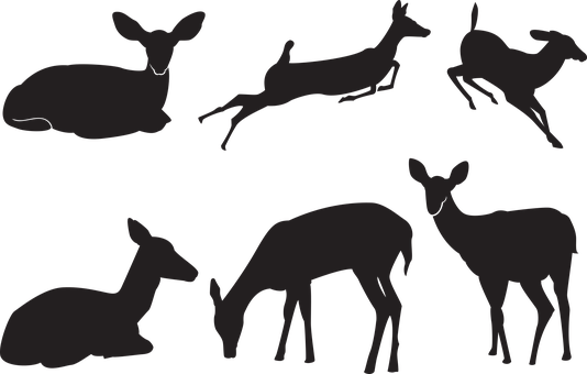 Deer, Silhouette, Nature, Animals, Wild, Animal
