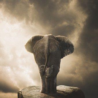 Elephant, Stone, Rock, Ganesha, Nature, Culture