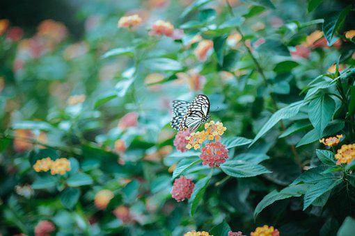 Butterfly, Flower, Nature, Insect, Bloom, Blossom