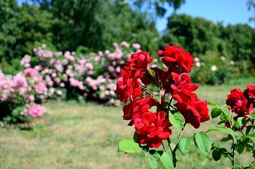 Flowers, Summer, Motley Grass, Nature