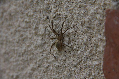 Spider, Wall, Nature, Insects, House