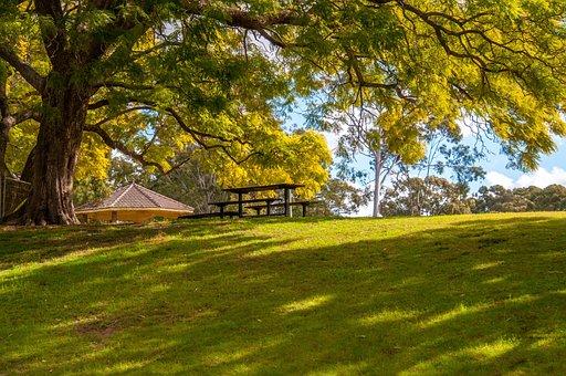 Park, Garden, Green, Nature, Spring