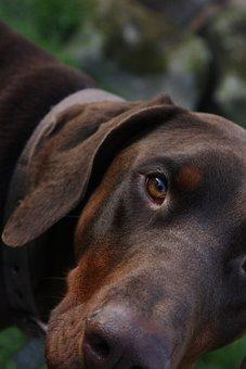 Dog, Animal, Pet, Portrait, Canine