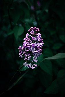 Flower, Pink, Nature, Plant, Bloom, Blossom, Flora