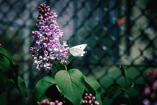 Flower, Pink, Nature, Plant, Bloom