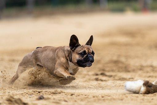 Dog Racing, Racecourse, Race, Sport