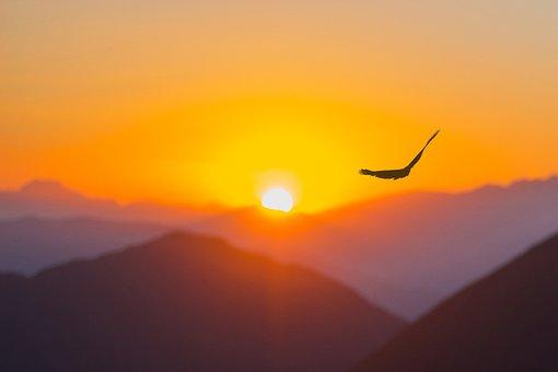 Sky, Sunset, Bird, Mountains, Nature