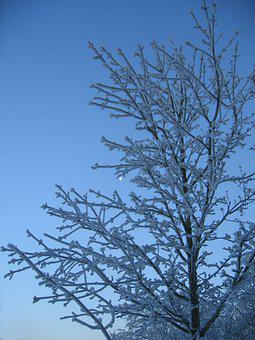 Tree, Winter, Snow, Frost, Cold